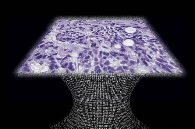 Obraz przykładowej tkanki stworzonej przez innowacyjny bezsoczewkowy mikroskop /materiały prasowe