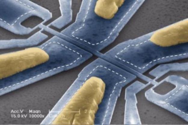 Obraz spod skaningowego mikroskopu elektronowego. Fot. Caltech / Scott Kelberg and Michael Roukes /materiały prasowe