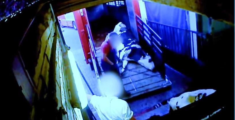 Obrońcy praw zwierząt ujawniają szokujące nagrania znęcania się nad krowami, źródło: SOKO Tierschutz /facebook.com