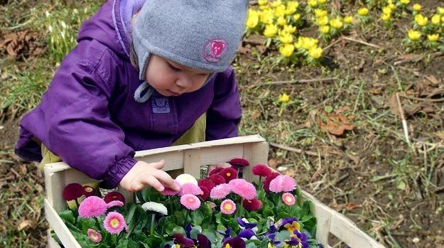 Obserwacja roślin może pomóc chorym dzieciom /© Panthermedia