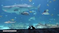 Oceanaria zamknięte z powodu koronawirusa. Skorzystały na tym te psiaki, które mogły po raz pierwszy wpaść z wizytą