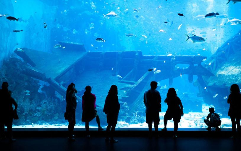 Oceanarium w Singapurze /123RF/PICSEL