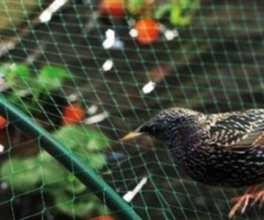Ochrona roślin przed ptakami