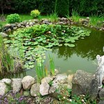 Oczka wodne nie rozwiążą problemu suszy