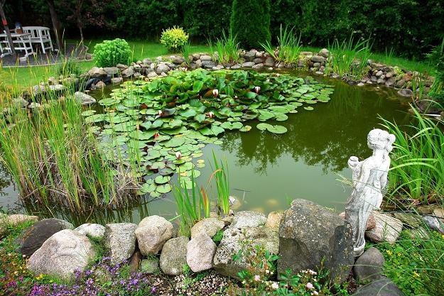Oczko wodne to element architektury ogrodowej, który znacząco poprawia wygląd całego otoczenia /©123RF/PICSEL