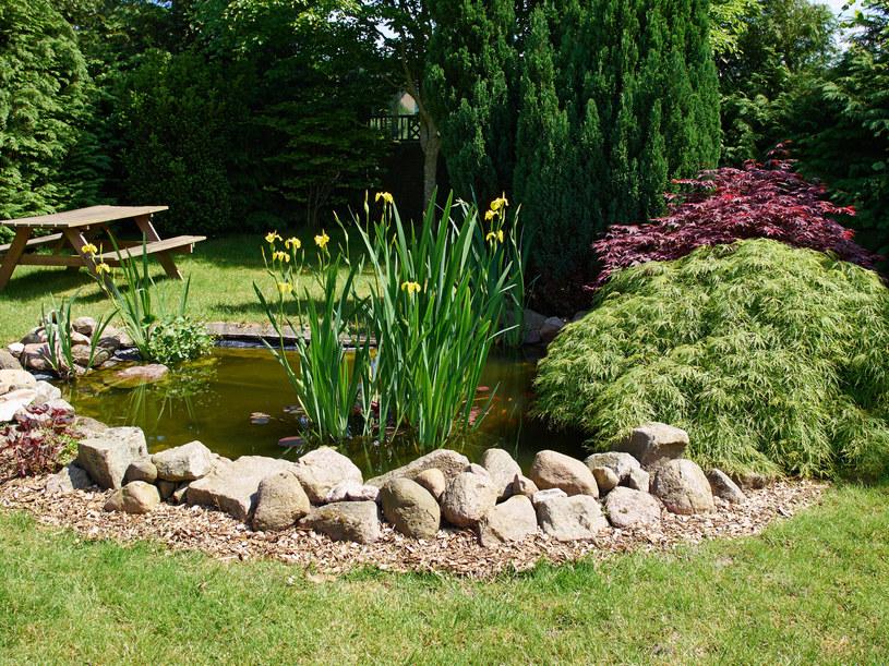 Oczko wodne wygląda w ogrodzie bardzo efektownie /123RF/PICSEL