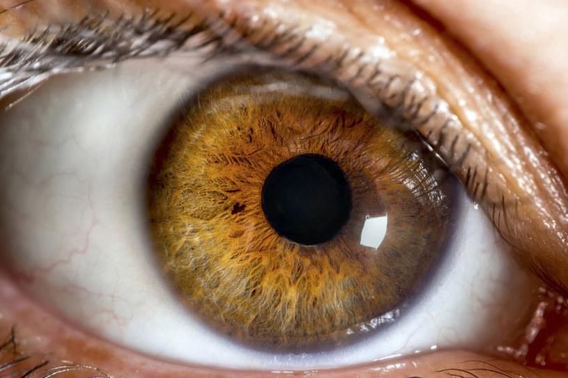 Oczy o piwnym kolorze /©123RF/PICSEL