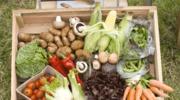 Oczyść posiłki, aby  żyć zdrowiej!