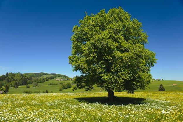 Od 17 lipca nowe stawki opłat za wycinkę drzew i krzewów /©123RF/PICSEL