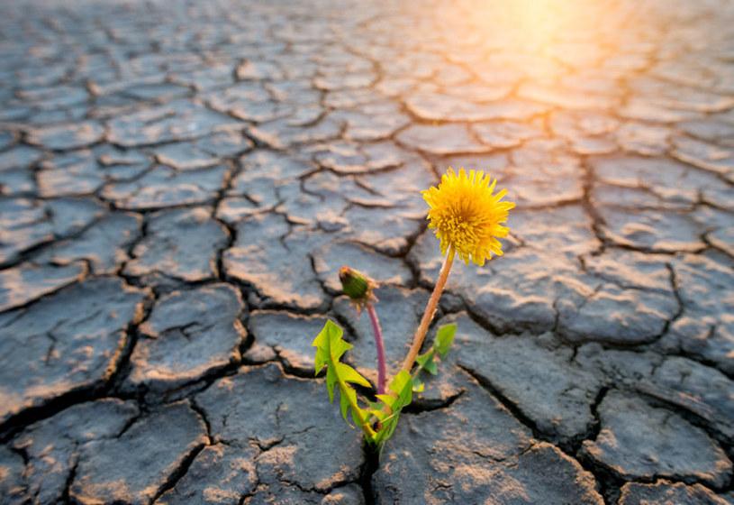 Od dawna Europa nie zaznała klęski głodu /123RF/PICSEL