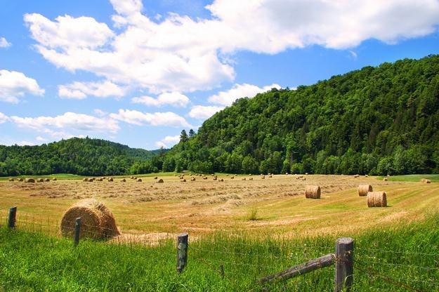 Od początku roku ceny ziemi rolnej wzrosły średnio o 10 proc. /© Panthermedia