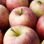 Od środy Rosja zakazuje importu jabłek z 31 białoruskich firm