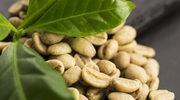 Odchudzająca zielona kawa