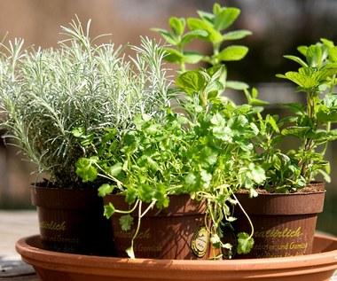 Odchudzające zioła i przyprawy, które pomogą poprawić sylwetkę