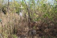 Odkryli polski cmentarz w Zimbabwe
