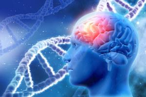 Odkryto 97 nieznanych obszarów mózgu