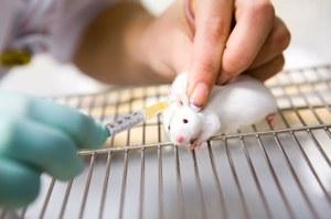 Odkryto białko spowalniające proces starzenia u myszy. Teraz czas na ludzi