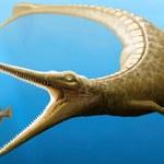 Odkryto brakujące ogniwo ewolucji krokodyli