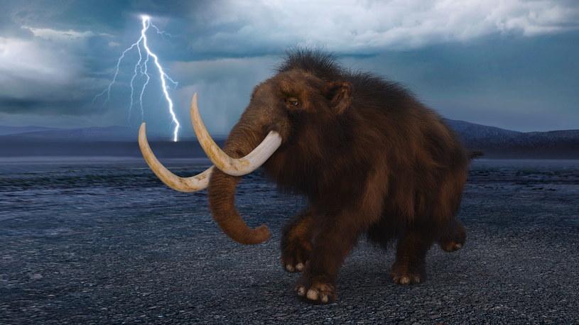 Odkryto DNA mamutów starszych od mamutów włochatych /123RF/PICSEL