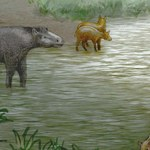 Odkryto dwóch nowych przodków współczesnych koni