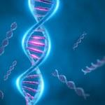 Odkryto gen szczupłości
