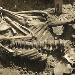 Odkryto najstarszą ofiarę ataku rekina