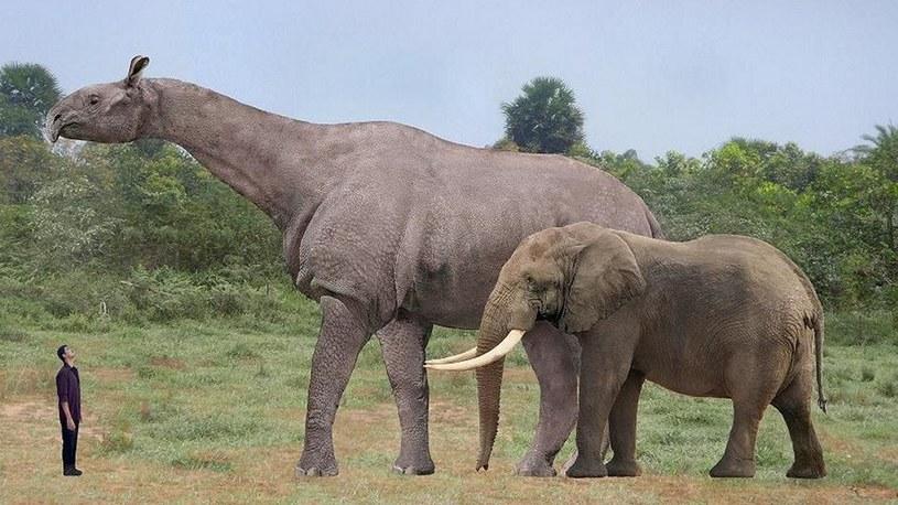 Odkryto największego ssaka, jaki kiedykolwiek chodził po naszej planecie /Geekweek
