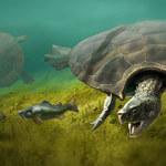 Odkryto największego żółwia lądowego, jaki istniał na Ziemi