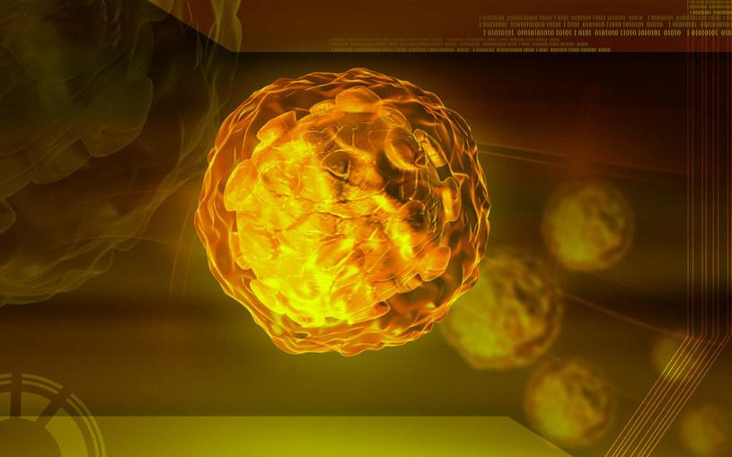 Odkryto nieznany wcześniej szczep wirusa polio /123RF/PICSEL