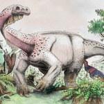 Odkryto niezwykły gatunek dinozaura