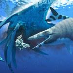 Odkryto niezwykły gatunek - przypominał rekina
