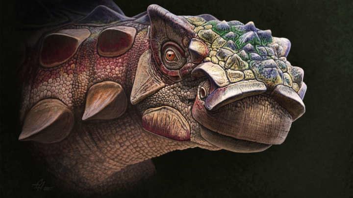 Odkryto nowy gatunek ankylozaura /materiały prasowe
