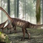 Odkryto nowy gatunek dziwnego dinozaura
