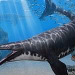 Odkryto nowy gatunek mozozaura