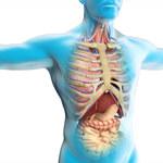 Odkryto nowy organ - przez 100 lat lekarze się mylili
