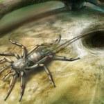 Odkryto ogoniastego przodka pająków sprzed 100 mln lat