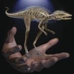 Odkryto przodka dinozaurów. Był wielkości filiżanki do kawy