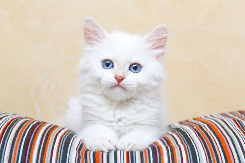 Odkryto szczątki przodka domowych kotów - i to w polskich jaskiniach /123RF/PICSEL