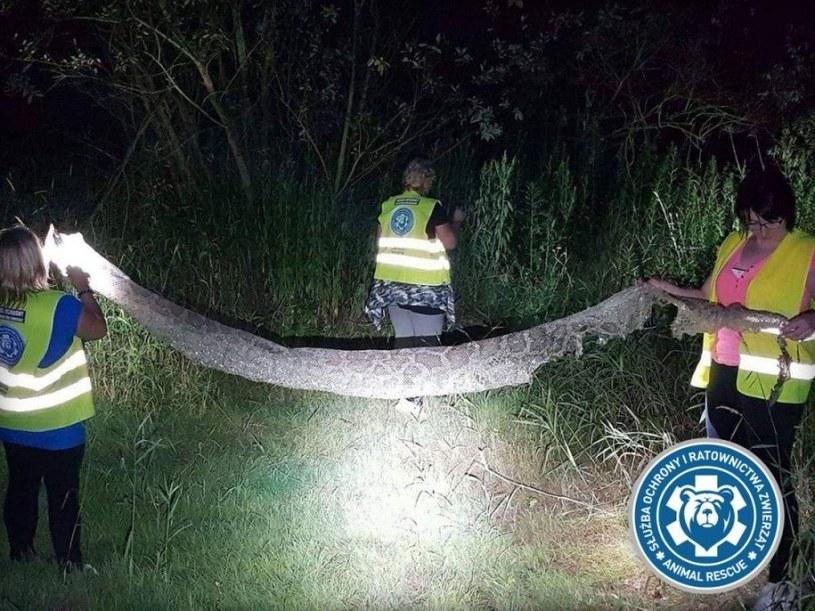 Odnaleziona skóra sześciometrowego pytona /Animal Rescue Polska /