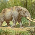 Odnaleziono kompletną czaszkę mastodonta pirenejskiego