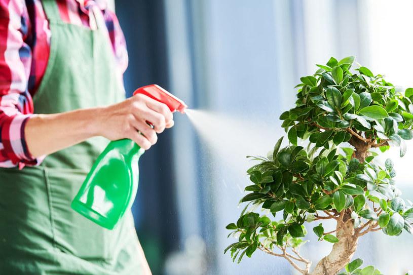 Odpowiednio dbaj o rośliny w donicach /123RF/PICSEL