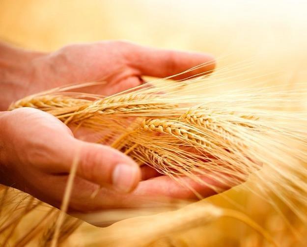 Odszkodowania dla rolników: Poszkodowani mogą liczyć na 60 milionów złotych /©123RF/PICSEL