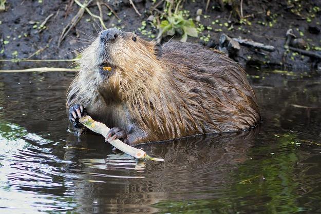 Odszkodowania za szkody wyrządzone przez dzikie zwierzęta nie są zwolnione z podatku /©123RF/PICSEL