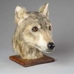 Odtworzono wygląd psa sprzed 4000 lat