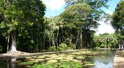 Odwiedź najpiękniejsze europejskie ogrody botaniczne