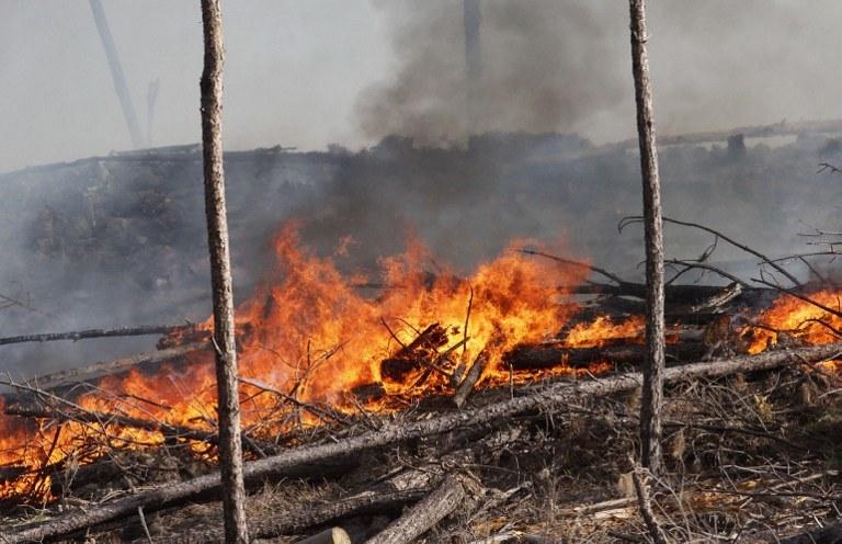 Ogień pochłonął 48 tysięcy hektarów łąk /AFP