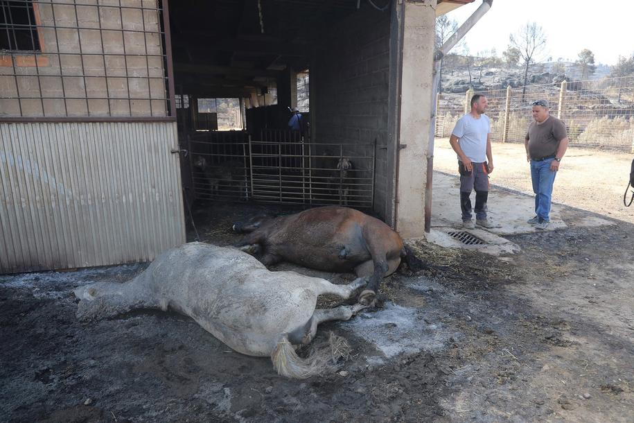 Ogień strawił 6000 hektarów lasów i terenów rolnych /JAUME SELLART /PAP/EPA