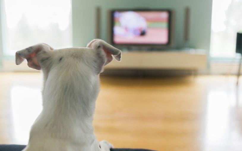 oglądanie telewizji z psem /© Photogenica