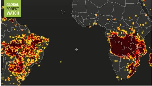 Ogniska zapalne na świecie /www.globalforestwatch.org /