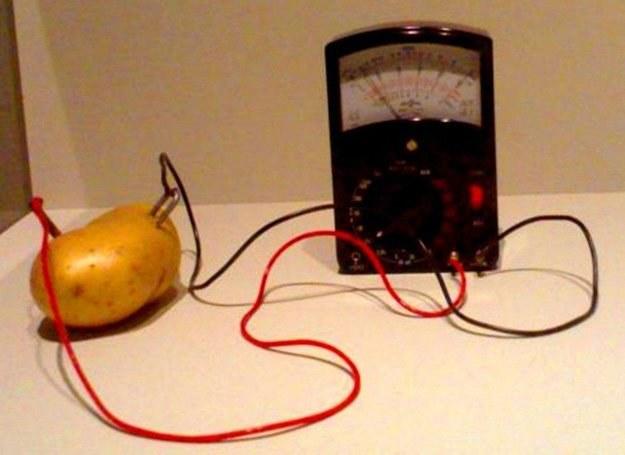 Ogólnodostępna bateria z ziemniaka /MWMedia